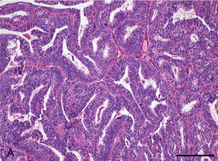 Australasian Immunohistochemistry Society: Quantitative Digital Pathology resources