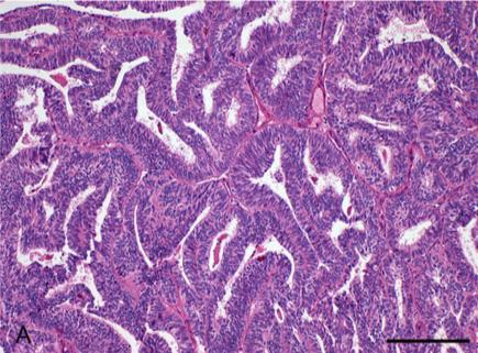 Australasian Immunohistochemistry Society: Quantitative Digital Pathology resources
